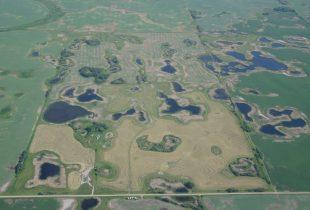 Manitoba farmer appreciates wetlands during prairie drought