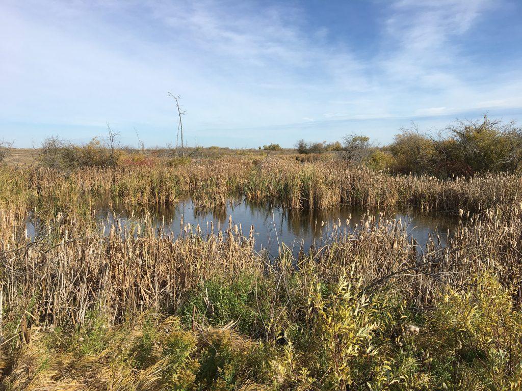 wetlands on Thompson farm near Hamiota MB