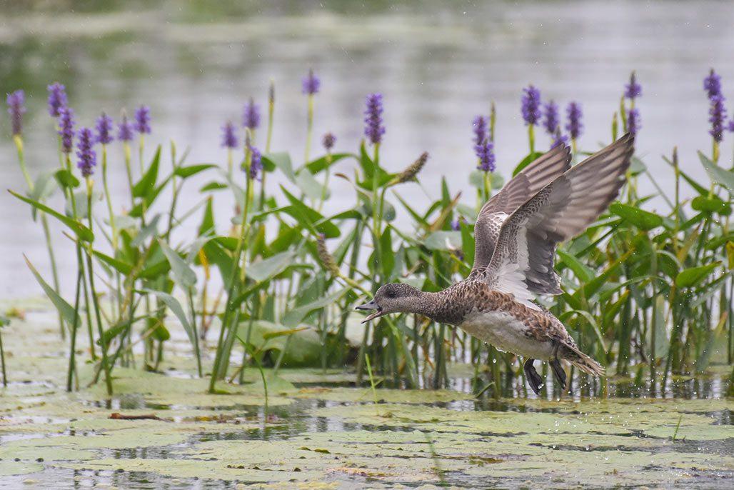 Portebello Creek marsh