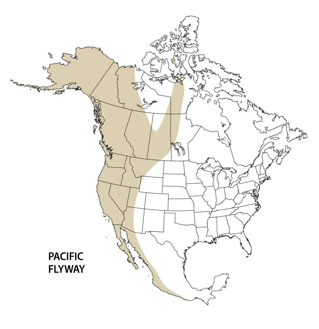Pacific flyway map