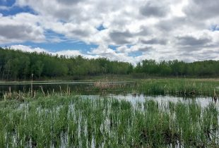 Wetland Centres of Excellence